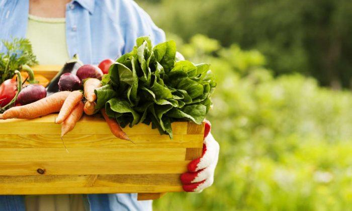 alimentos-organicos-capa